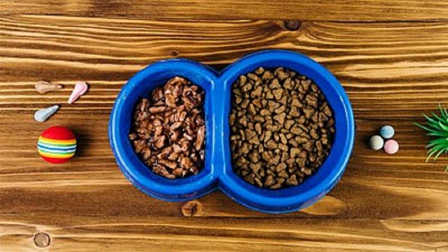 Importanta hranirii animalelor noastre de companie cu hrana de calitate