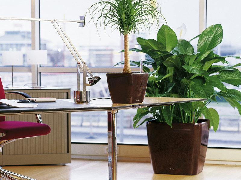 Care sunt cele mai potrivite flori pentru birou?